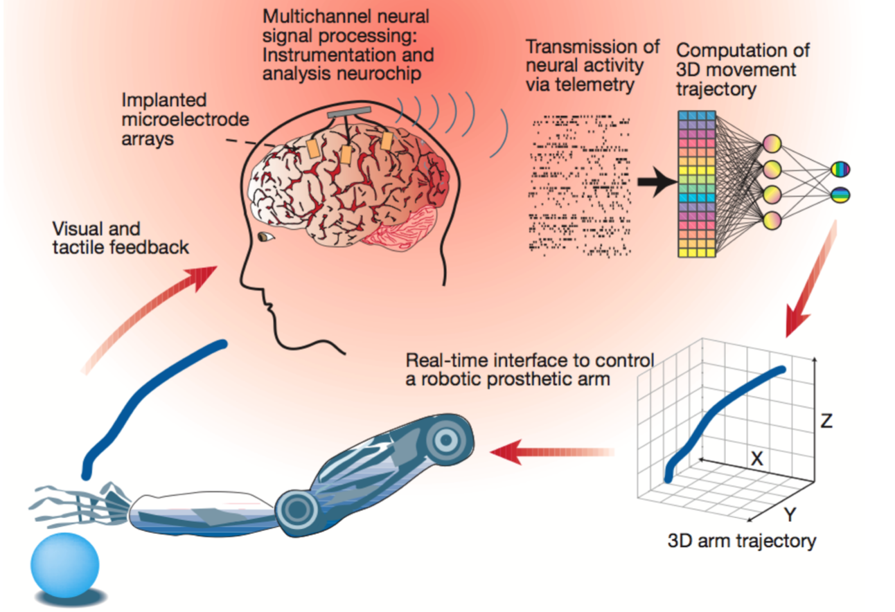 Nathaniel Allen Evans' research on mental imagery decoding and brain-machine interfaces.
